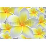 Vliesové fototapety žluté květy Plumeria rozměr 312 cm x 219 cm