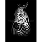 Vliesové fototapety zebra rozměr 184 cm x 254 cm
