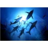 Vliesové fototapety potápěč s velrybami rozměr 368 cm x 254 cm