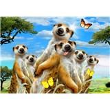 Vliesové fototapety selfie surikaty rozměr 368 cm x 254 cm