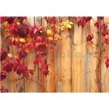 Vliesové fototapety podzimní plot rozměr 312 cm x 219 cm