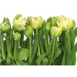 Fototapety tulipány
