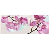 Vliesové fototapety orchidej rozměr 250 cm x 100 cm