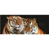 Vliesové fototapety tygři rozměr 250 cm x 104 cm