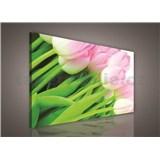 Obraz na plátně růžové tulipány 75 x 100 cm
