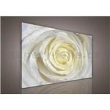 Obraz na plátně bílá růže s kapkami vody 100 x 75 cm