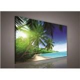 Obraz na plátně palmy 75 x 100 cm