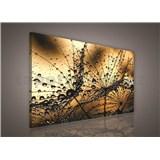Obraz na plátně ranní rosa hnědá 75 x 100 cm