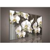 Obraz na plátně bílá orchidej 75 x 100 cm