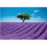 Fototapety Provence rozměr 366 cm x 254 cm