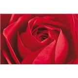 Fototapety Limportant cest la Rose rozměr 175 cm x 115 cm
