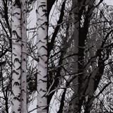 Statická fólie transparentní Wood - 67,5 cm x 15 m