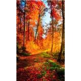 Vliesové fototapety procházka lesem rozměr 150 cm x 250 cm
