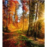 Vliesové fototapety procházka lesem rozměr 225 cm x 250 cm