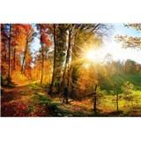 Vliesové fototapety procházka lesem rozměr 375 cm x 250 cm