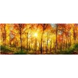 Vliesové fototapety prosluněný les rozměr 375 cm x 150 cm