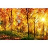 Vliesové fototapety prosluněný les rozměr 375 cm x 250 cm