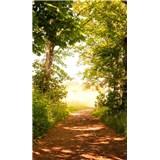 Vliesové fototapety lesní cesta rozměr 150 cm x 250 cm