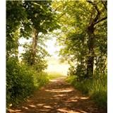 Vliesové fototapety lesní cesta rozměr 225 cm x 250 cm