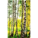 Vliesové fototapety březový les rozměr 150 cm x 250 cm