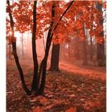 Vliesové fototapety mlhový les rozměr 225 cm x 250 cm