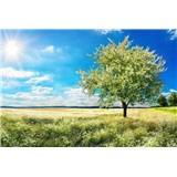 Vliesové fototapety rozkvetlý strom rozměr 375 cm x 250 cm