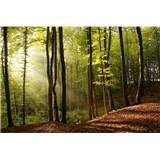 Vliesové fototapety les rozměr 225 cm x 250 cm