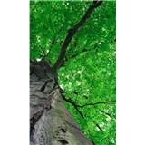Vliesové fototapety koruny stromů rozměr 150 cm x 250 cm