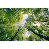Vliesové fototapety stromy rozměr 375 cm x 250 cm