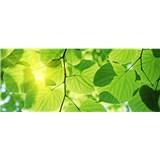 Vliesové fototapety zelené listy rozměr 375 cm x 150 cm