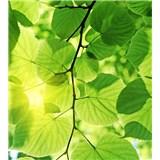 Vliesové fototapety zelené listy rozměr 225 cm x 250 cm