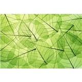 Vliesové fototapety listové žíly rozměr 375 cm x 250 cm