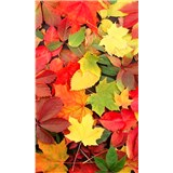 Vliesové fototapety barevný podzim rozměr 150 cm x 250 cm