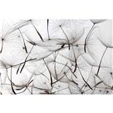 Vliesové fototapety létající pampelišky rozměr 375 cm x 250 cm