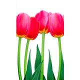 Vliesové fototapety tulipány rozměr 150 cm x 250 cm