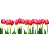 Vliesové fototapety tulipány rozměr 375 cm x 150 cm