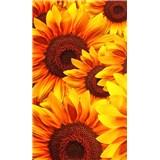 Vliesové fototapety květy slunečnic rozměr 150 cm x 250 cm