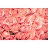 Vliesové fototapety růže rozměr 375 cm x 250 cm