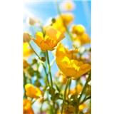 Vliesové fototapety žluté květy rozměr 150 cm x 250 cm