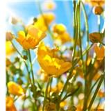 Vliesové fototapety žluté květy rozměr 225 cm x 250 cm
