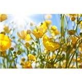 Vliesové fototapety žluté květy rozměr 375 cm x 250 cm