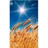 Vliesové fototapety pšeničné pole rozměr 150 cm x 250 cm