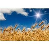 Vliesové fototapety pšeničné pole rozměr 375 cm x 250 cm
