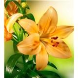 Vliesové fototapety žlutá lilie rozměr 225 cm x 250 cm