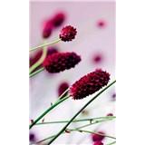 Vliesové fototapety květiny fialové rozměr 150 cm x 250 cm