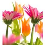 Vliesové fototapety jarní květy rozměr 225 cm x 250 cm