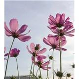 Vliesové fototapety kosmos květy rozměr 225 cm x 250 cm