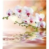 Vliesové fototapety bílá orchidej rozměr 225 cm x 250 cm