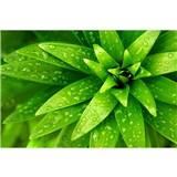 Vliesové fototapety orosené listy rozměr 375 cm x 250 cm