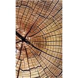Vliesové fototapety letokruhy kmene rozměr 150 cm x 250 cm